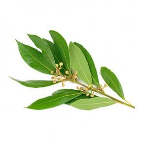 planta ravintsara